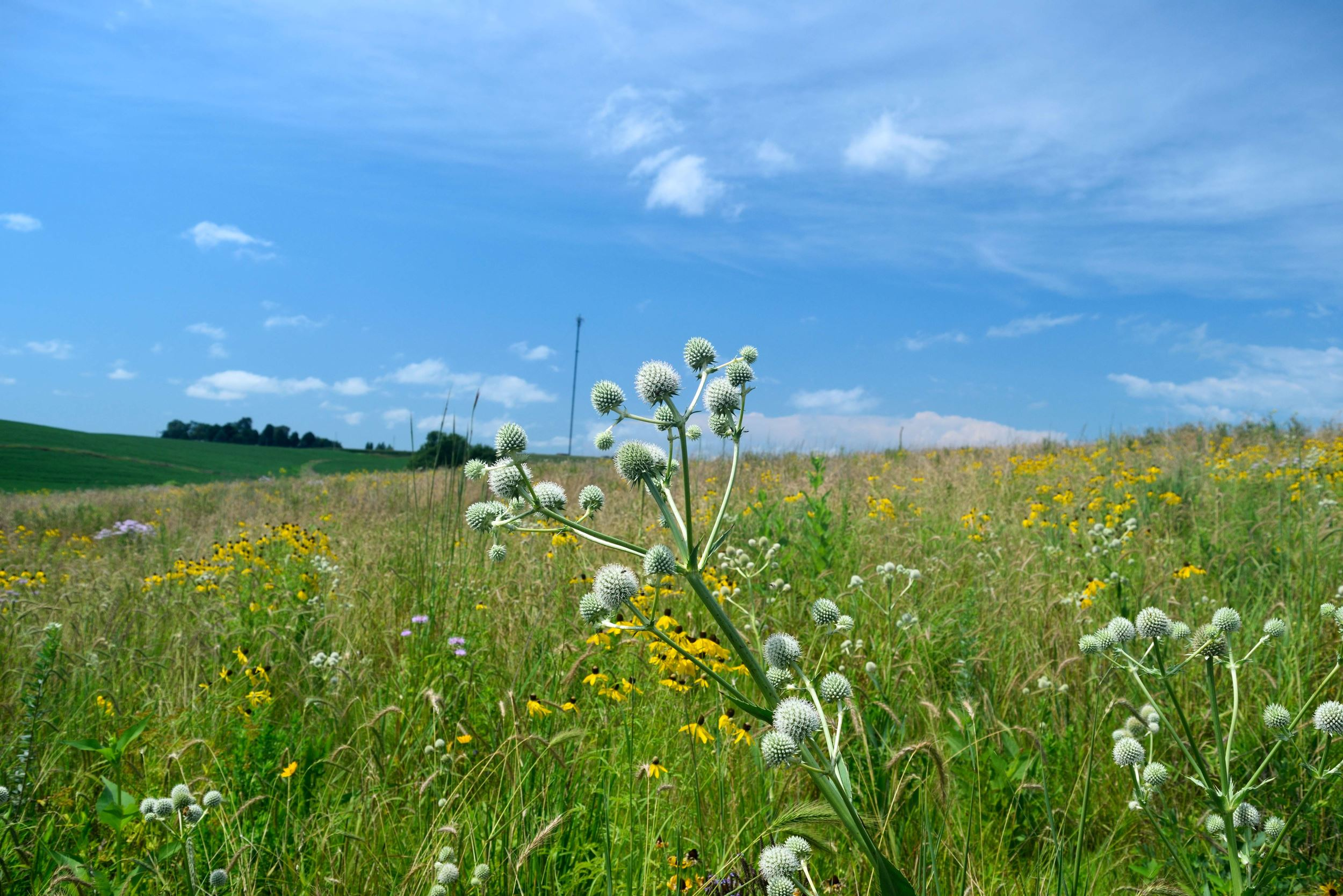 Prairie STRIPS are improving wildlife habitat on Lanz Heritage Farm