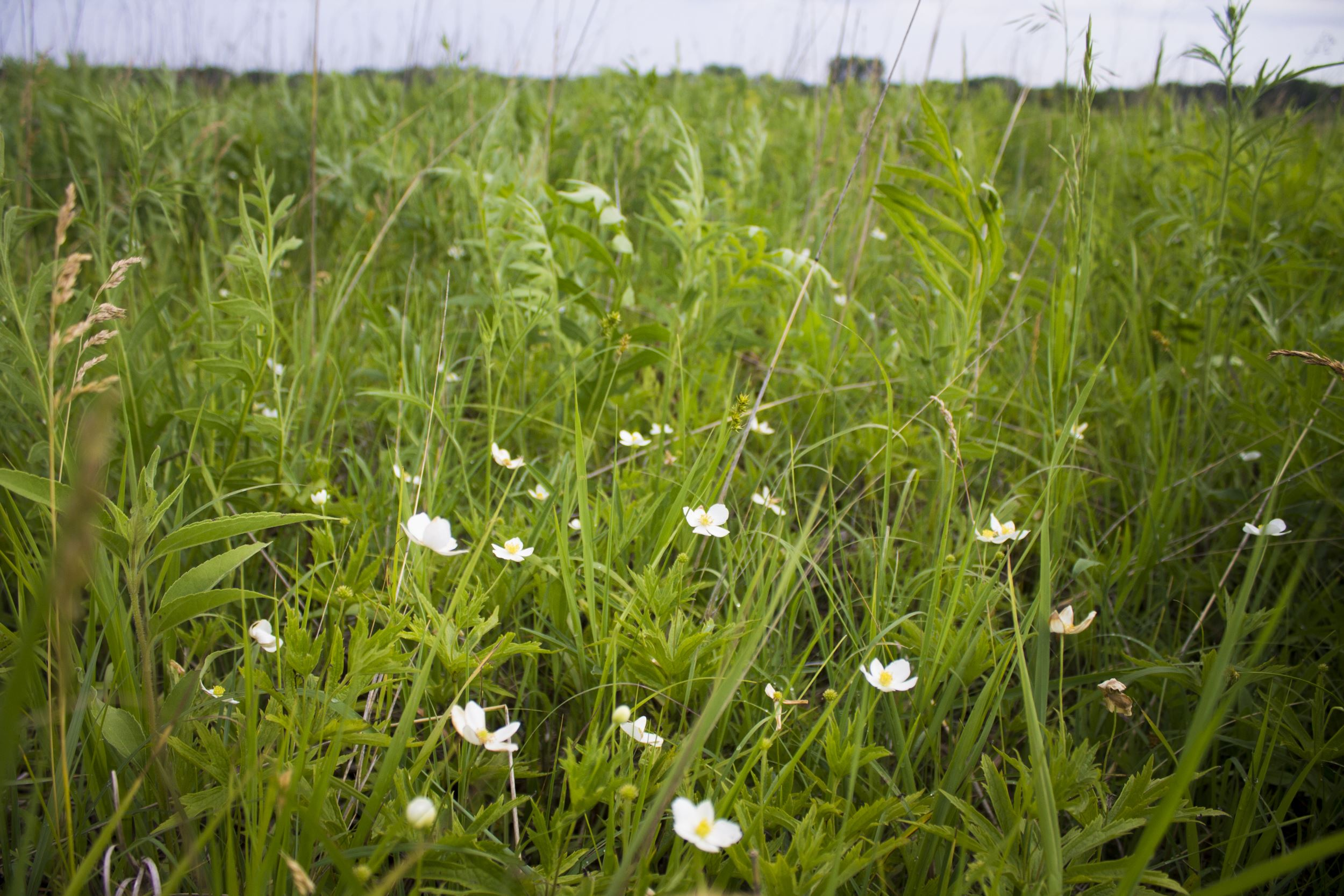 Remnant Prairie: A closer look at Iowa's rarest landscape