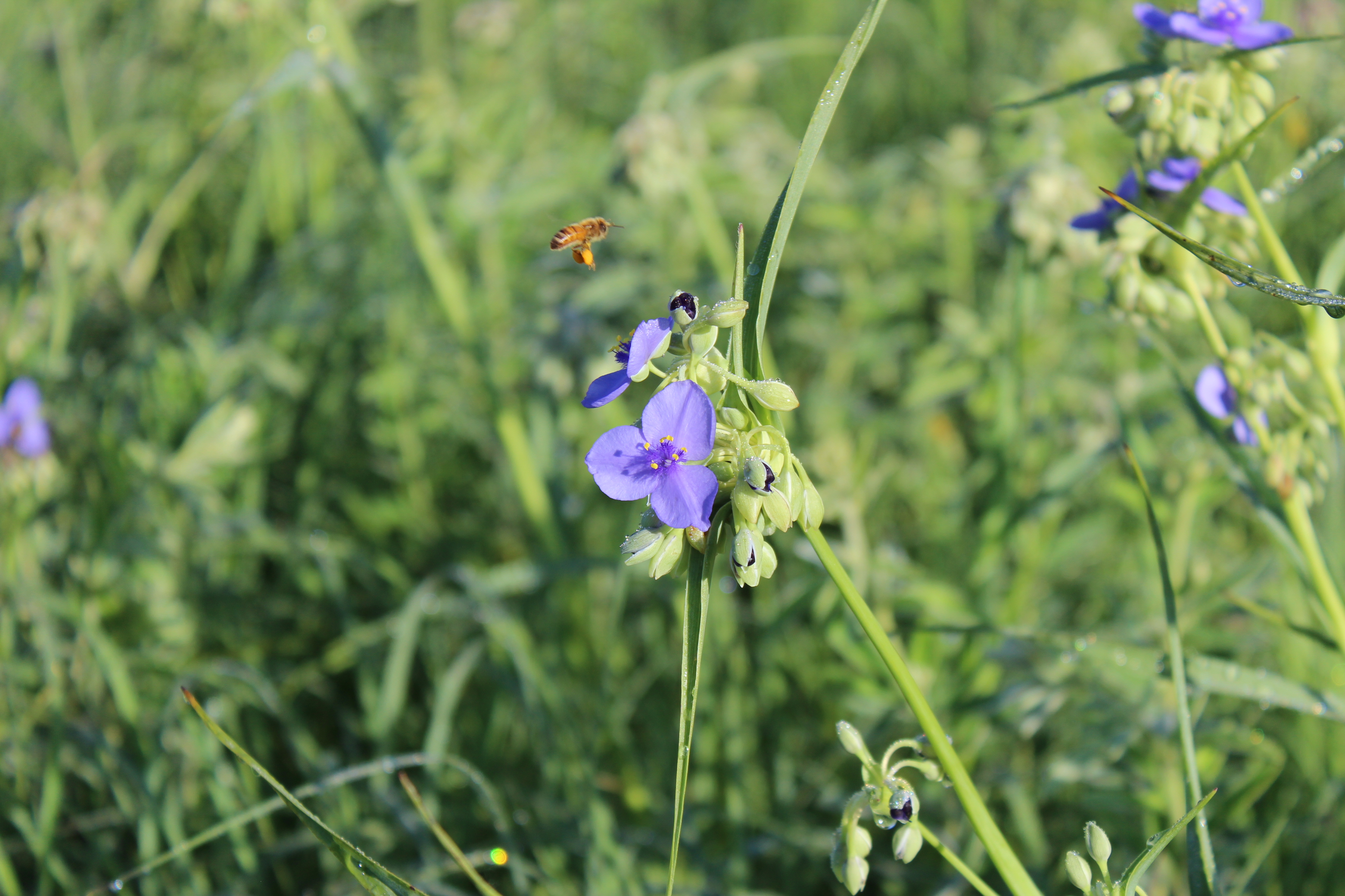 how to start a backyard prairie iowa natural heritage foundation