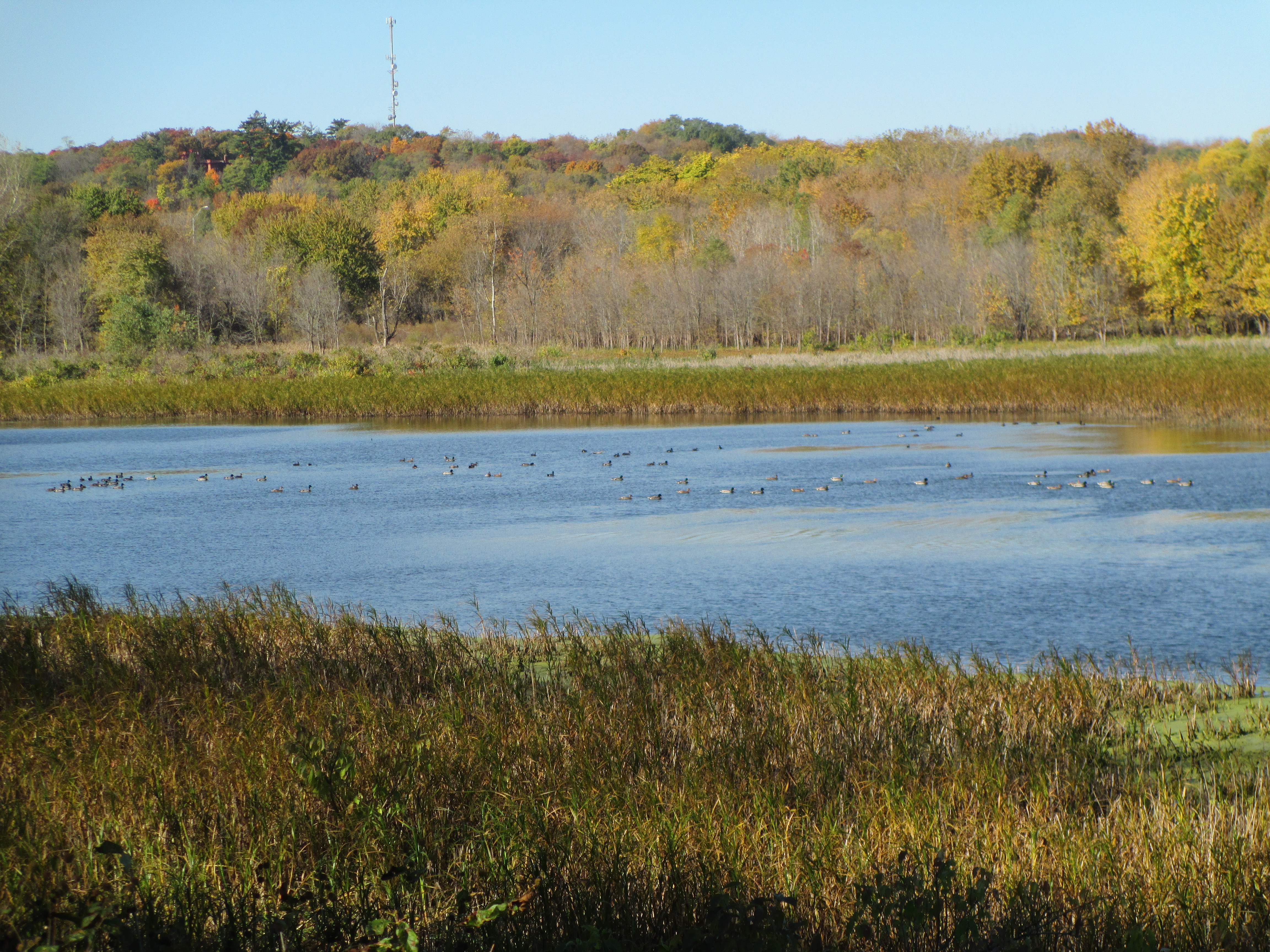 REAP In Your Region: Nahant Marsh, Wildcat Den State Park and more in eastern Iowa