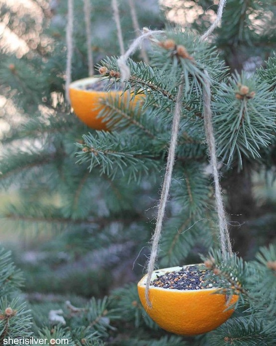 Do It Yourself: Orange Bird Feeder