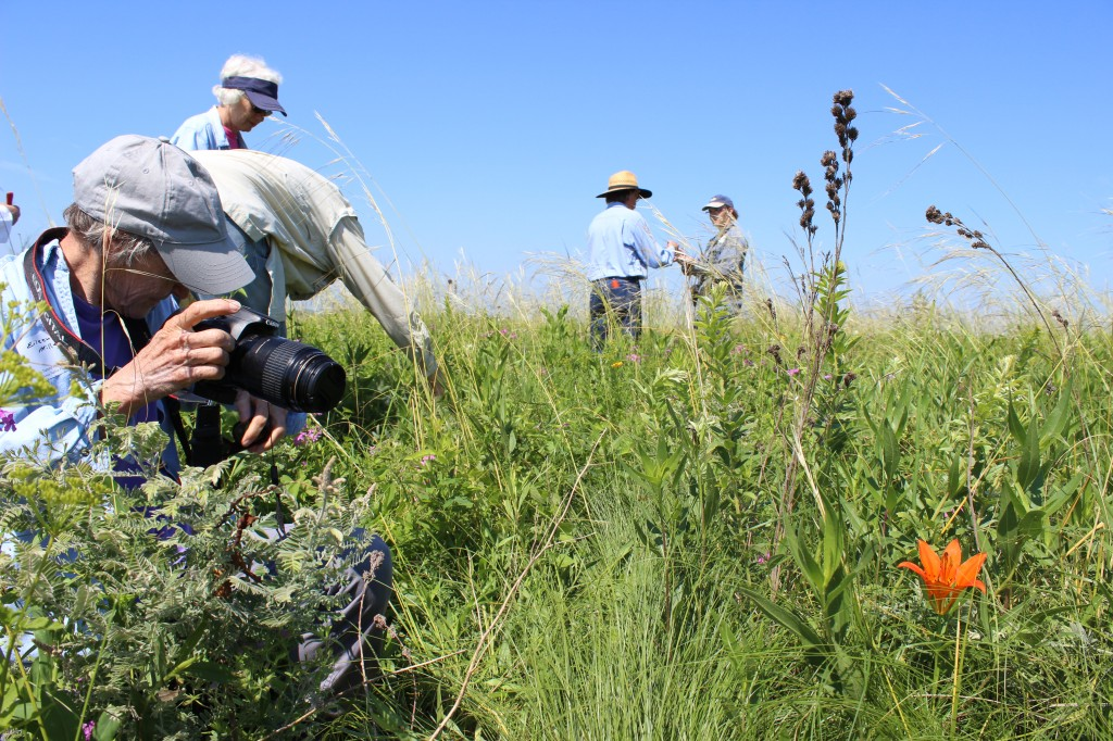 A tour participant photographs a wood lily at the Stinson Prairie State Preserve.