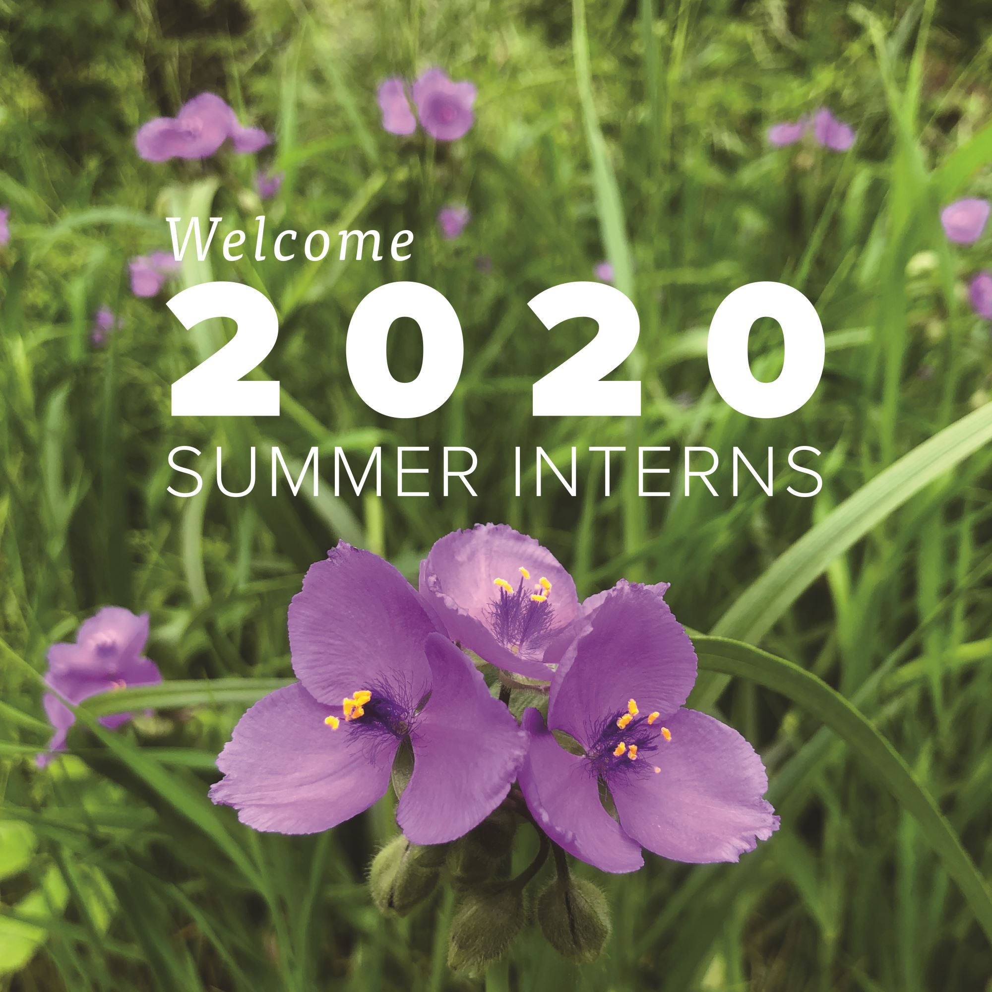 Meet INHF's 2020 Summer Interns