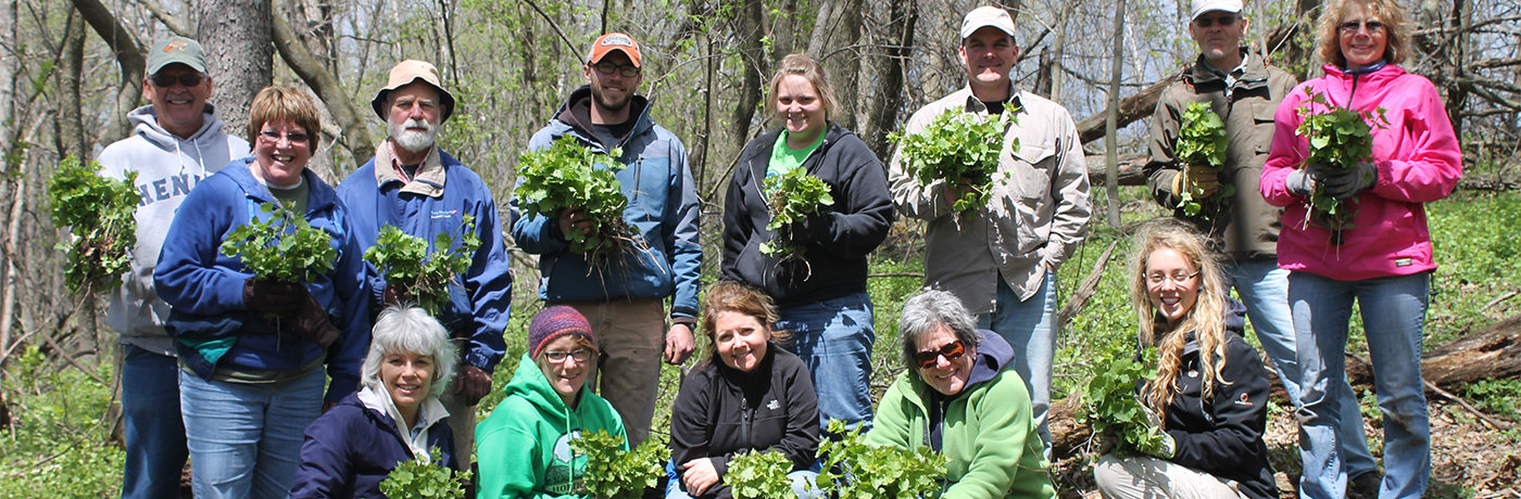 Volunteers pull garlic mustard in Allamakee County