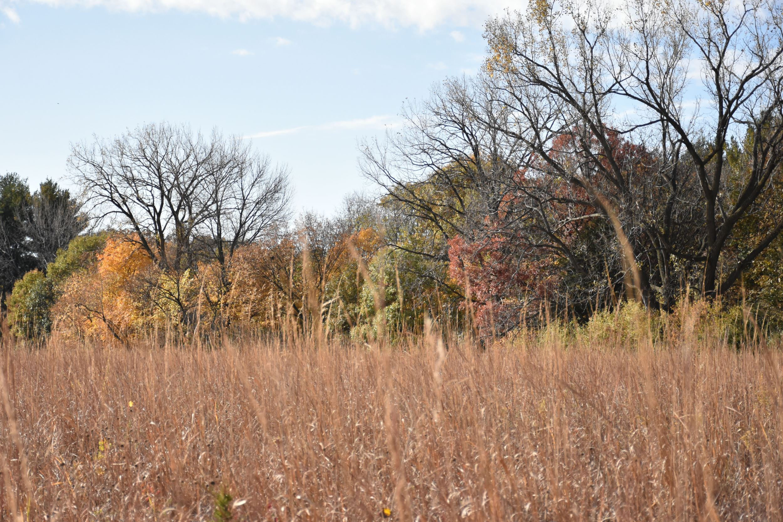 Autumn prairie