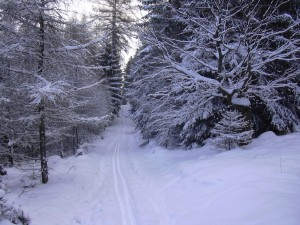 Cross_country_skiing_trail_Brdy1