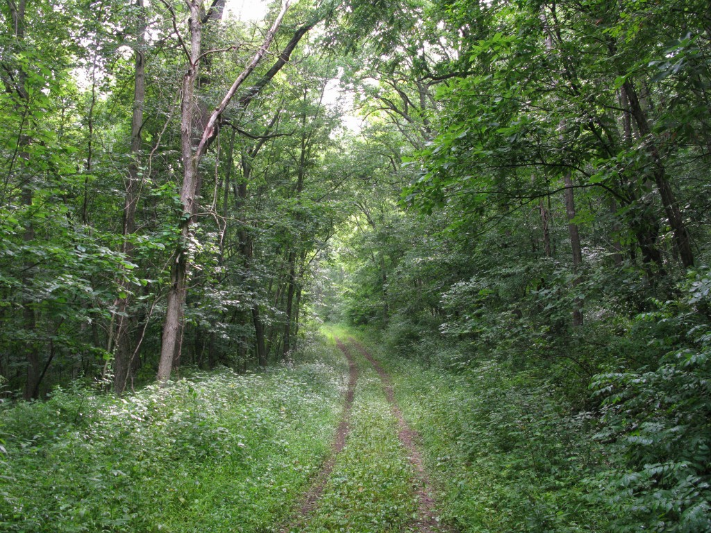 INHF's Brian Fankhauser will lead a hike here at Heritage Valley on Sunday, May 31.