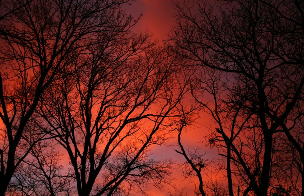 Leafless Trees at Sunset